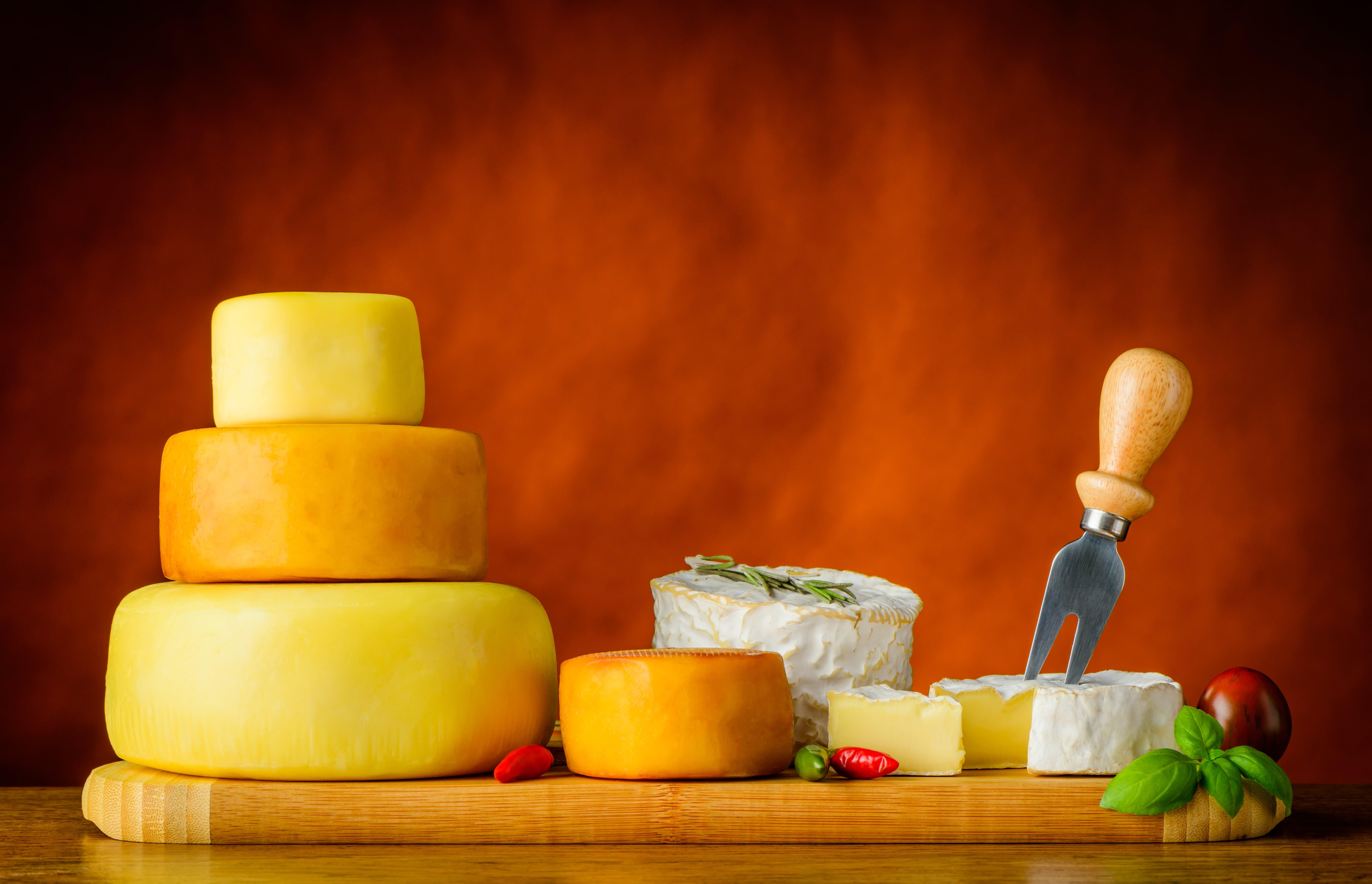 Il formaggio vaccino in provincia di Caserta