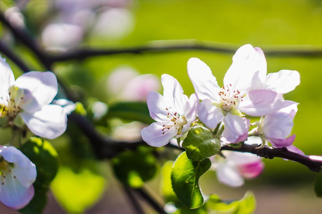 Per ordinare i tuoi fiori più belli scegli il fiorista online